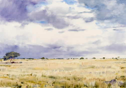Karoo Grass - oil on paper
